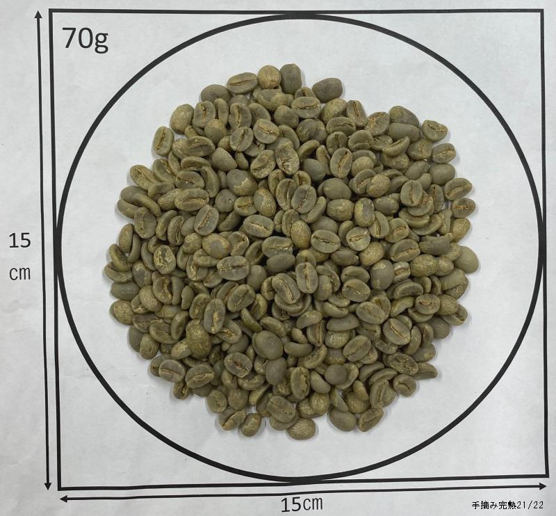 セラード 手摘み完熟豆 Washed 2019
