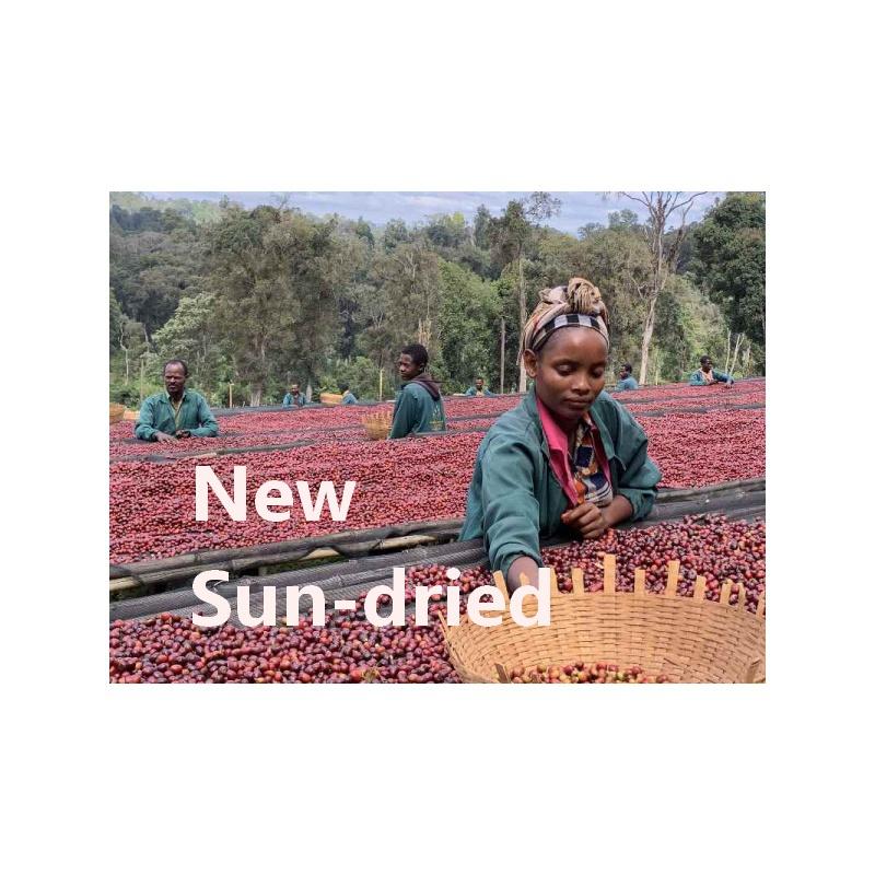 エチオピア・METAD社ALAKA G1 Sun-dried 19/20