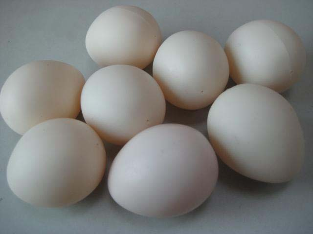 Super Plastic egg/スーパープラスチックエッグ