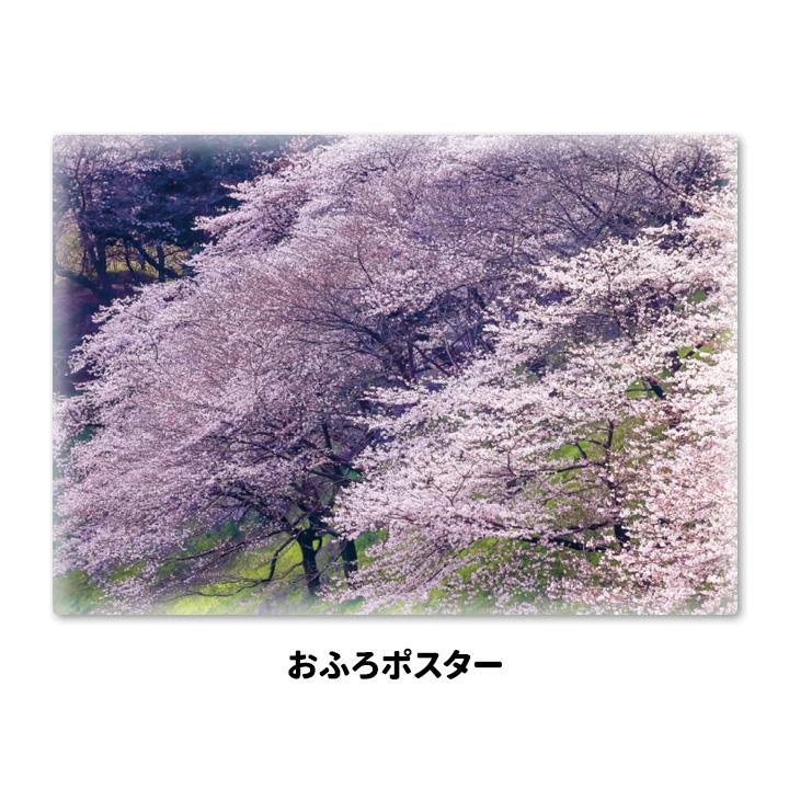 おふろポスター【桜土手】マグネットシート製【宅急便限定】