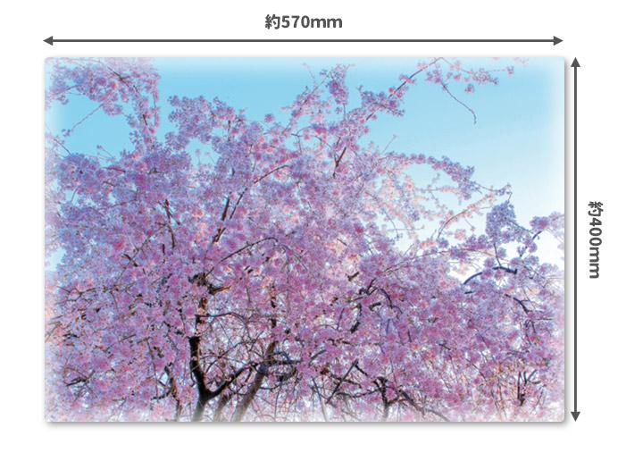 おふろポスター【青空と桜】マグネットシート製【宅急便限定】