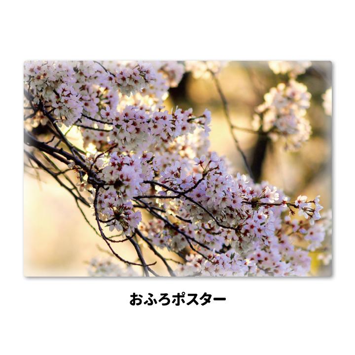 おふろポスター【桜の枝】マグネットシート製【宅配便限定】