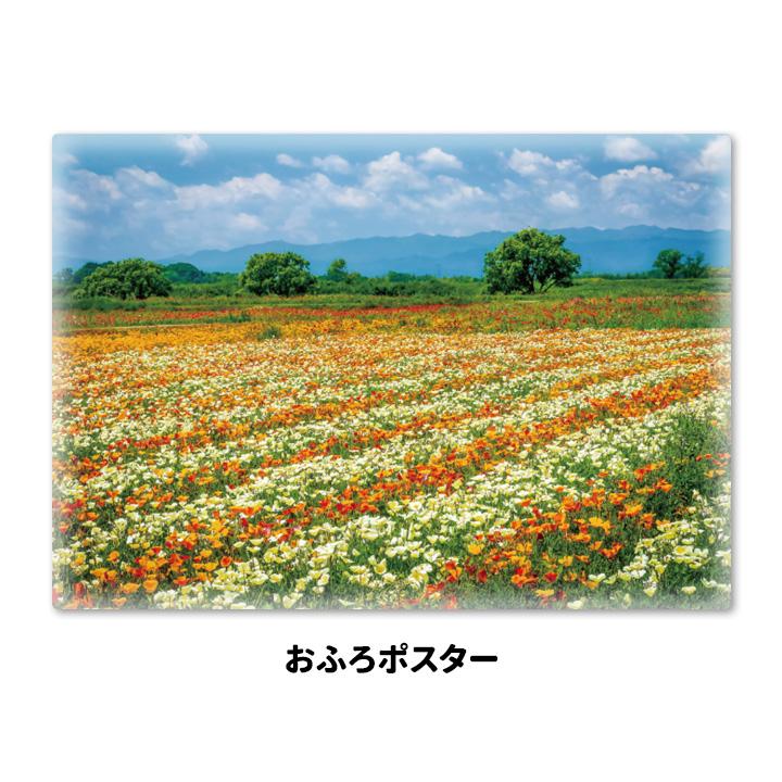 おふろポスター【ポピー畑】マグネットシート製【宅急便限定】