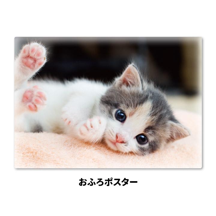 おふろポスター【子猫】マグネットシート製【宅急便限定】