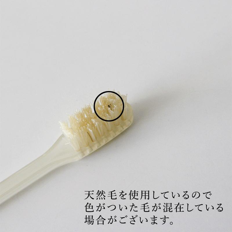 ハブラシ(ケント)