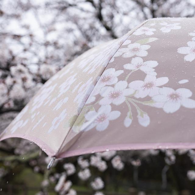 【晴雨兼用折りたたみ傘】絵おり  桜