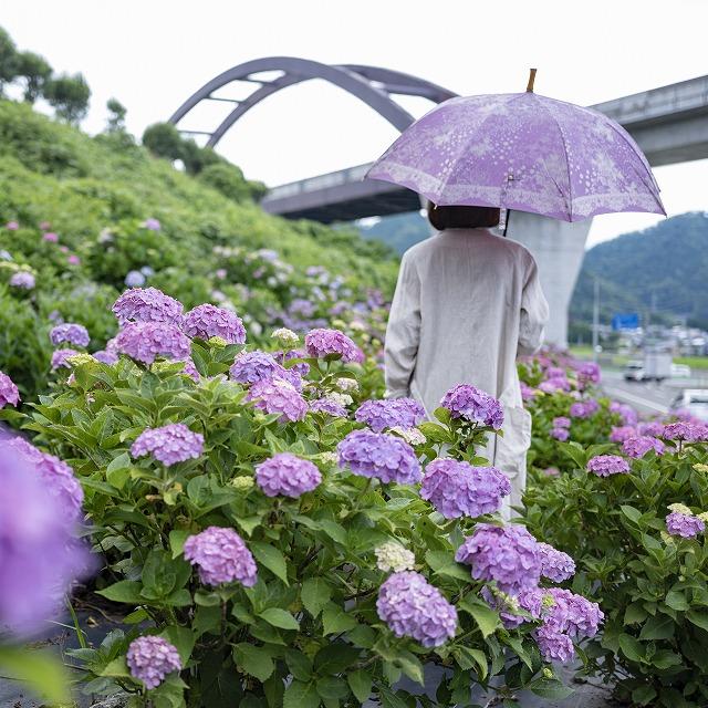 【晴雨兼用】kirie ドットフラワー(アメジスト)
