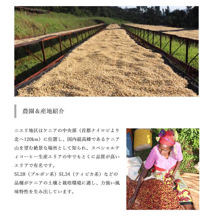 【送料無料】焙煎工房本池 ケニア ガタイティ フリーウォッシュト(浅煎り)400g