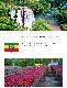 【送料無料】焙煎工房本池 エチオピア ホワイトナイルCHIRE ナチュラル(浅煎り)500g