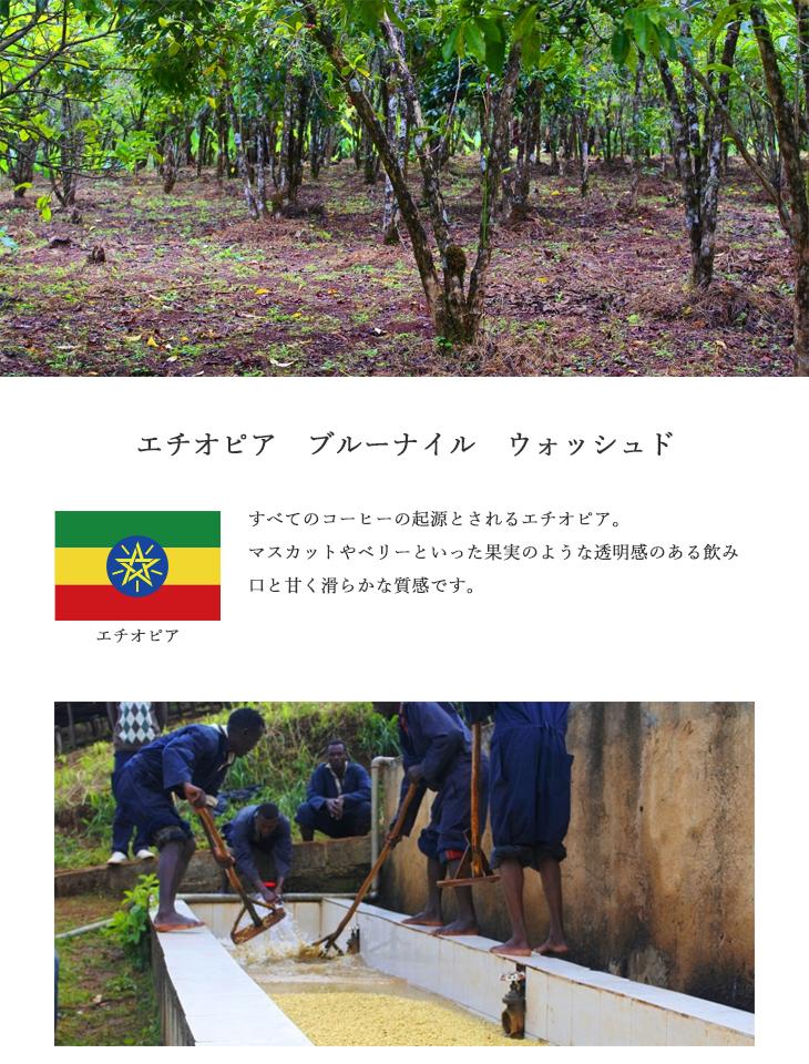 【送料無料】焙煎工房本池 エチオピア ブルーナイル ウォッシュド(浅煎り)500g