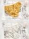 【ネコポス送料220円】フェミニンショーツ3カラー《かわいいコスプレランジェリー》【SEVENTY-THREE】【2608】