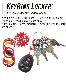 NITEIZE ナイトアイズ キーリングロッカー アルミニウム KEYRING LOCKER ALUMINUM キーラック S-BINER エスビナー Sビナー マイクロロック 鍵 5本 まとめる カラビナ キーホルダー キーリング