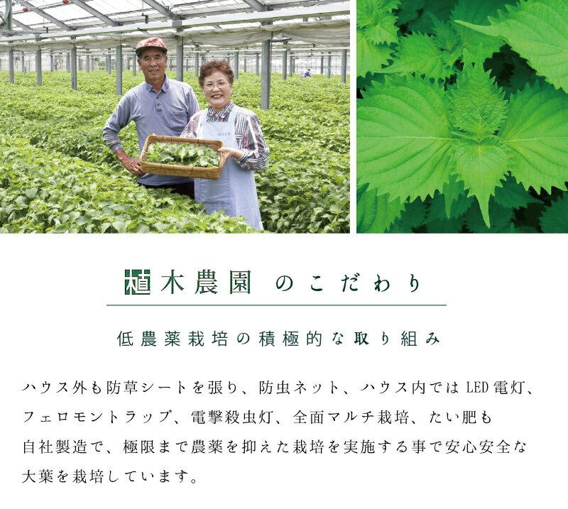 大分植木農園 大葉胡椒 大葉唐辛子 40g×30個