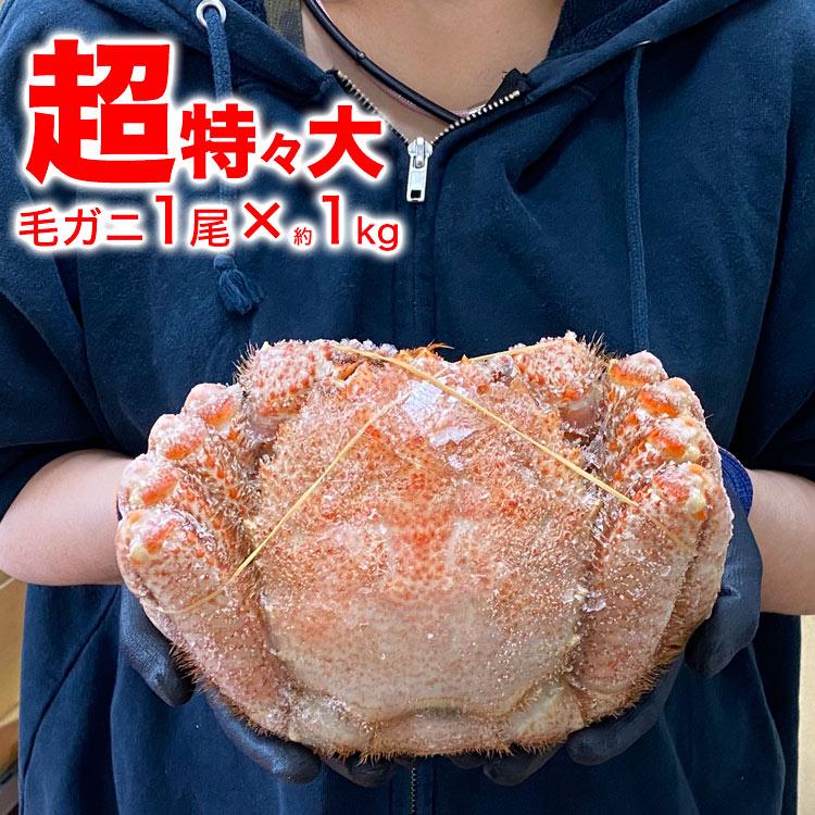毛ガニ 1尾 1kg 超特々大[一級品堅][毛がに カニ姿 かに味噌][訳あり 訳有]