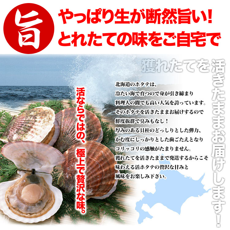 活ほたて貝付き北海道産約2.2〜3kg分(約15〜18枚前後)(お届け日指定不可/選択無効)[帆立/殻付き/生きほたて][出荷目安 収獲でき次第 1週間前後〜4週間前後]