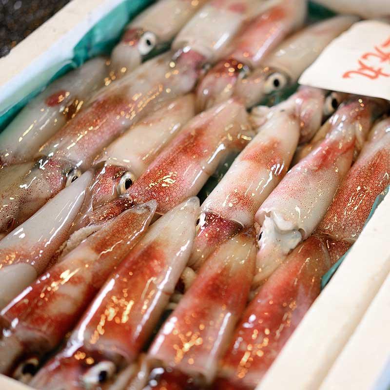 若狭北前鮨 鮨ネタ ケンサキイカ