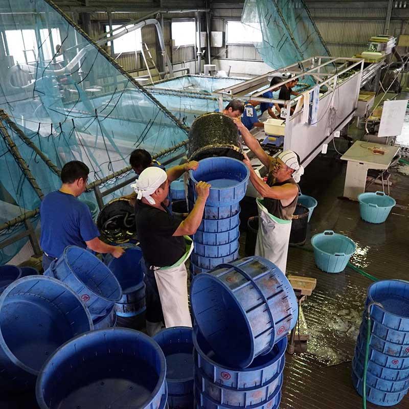 鹿児島県産 うなぎ蒲焼き 約140g×3尾 (タレ、山椒付き)
