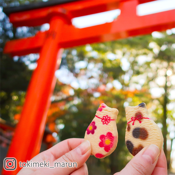 【京の猫さんくっきー】 6枚入(縞、三毛、花)
