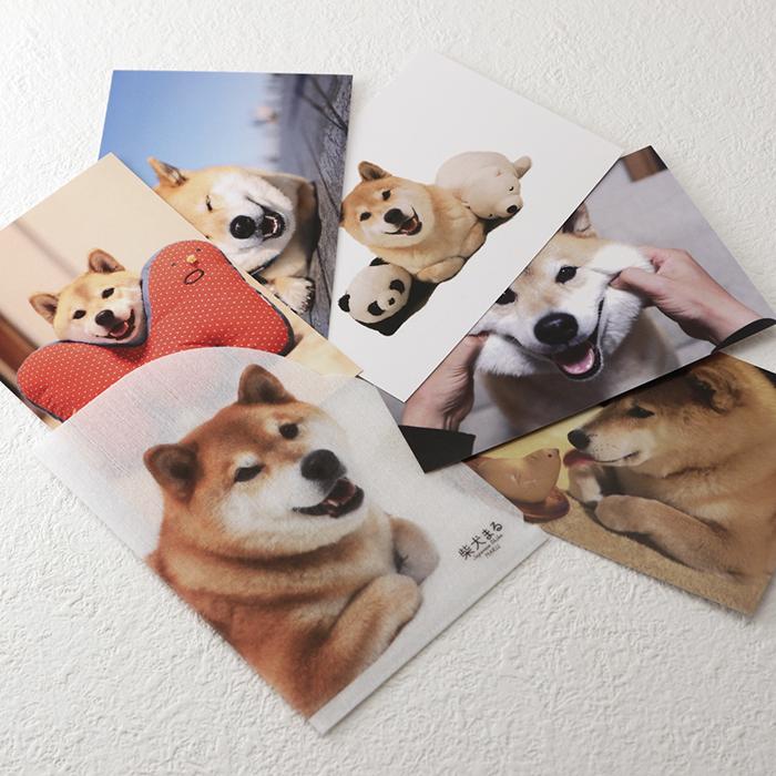 柴犬まる;もこもこクリアファイル付きポストカード5枚セット;スマイルまる