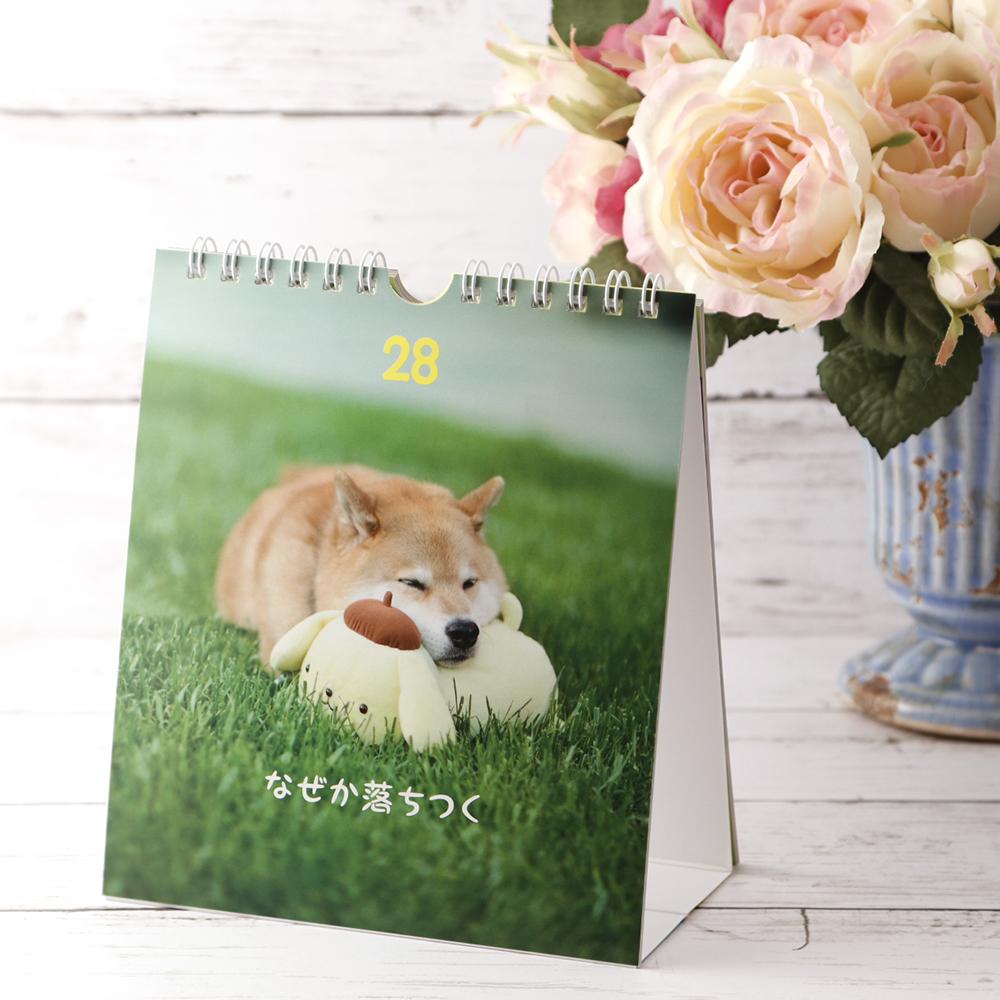柴犬まる;ポムポムプリン;柴犬まる×ポムポムプリンのハッピー日めくり