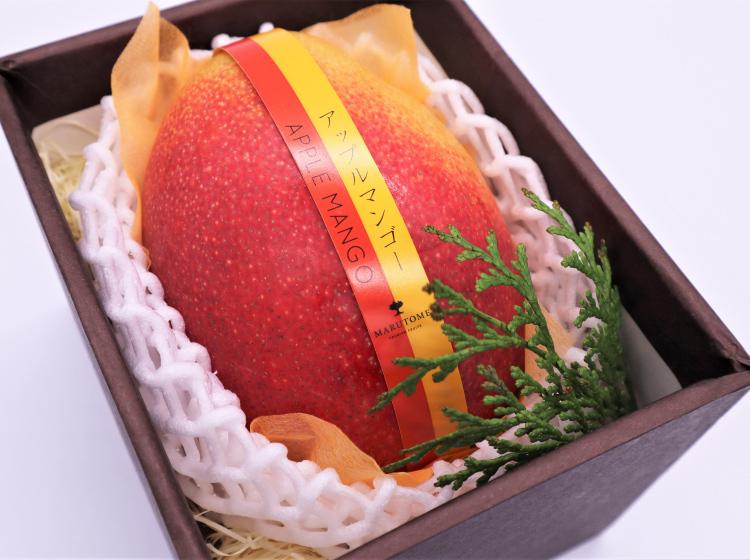 アップルマンゴー【1個入】