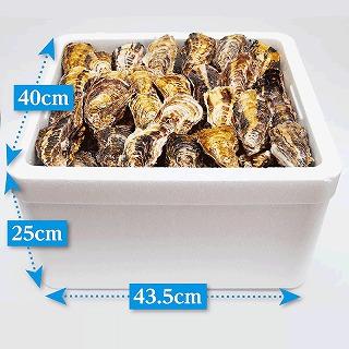 (活き)一粒殻付き牡蠣Lサイズ(大)100個