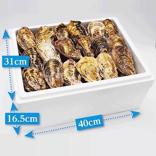 (活き)一粒殻付き牡蠣Lサイズ(大)50個