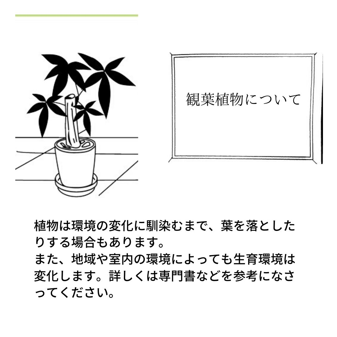 シンゴ二ウム チョコレート -01