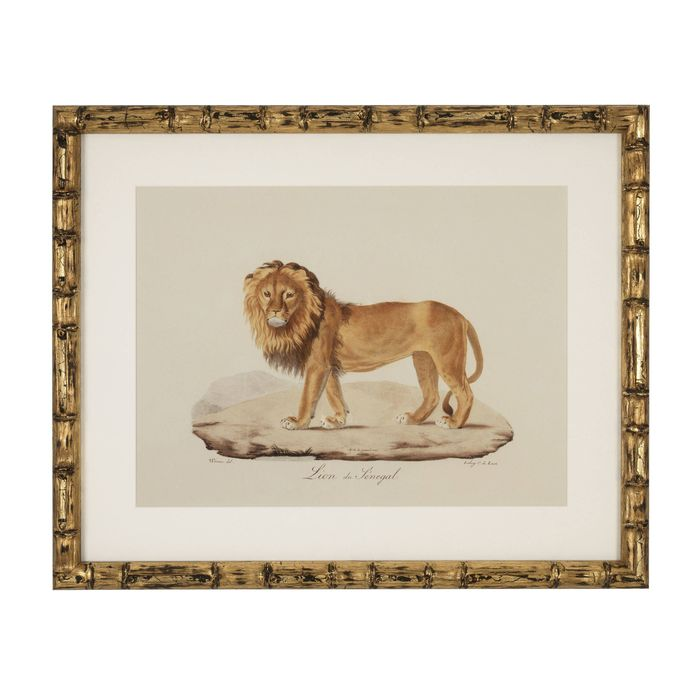 EICHHOLTZ_Prints EC262 Lion, Tigre, Jaguar set of 6