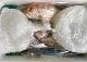 7,000円 おまかせ鮮魚BOX