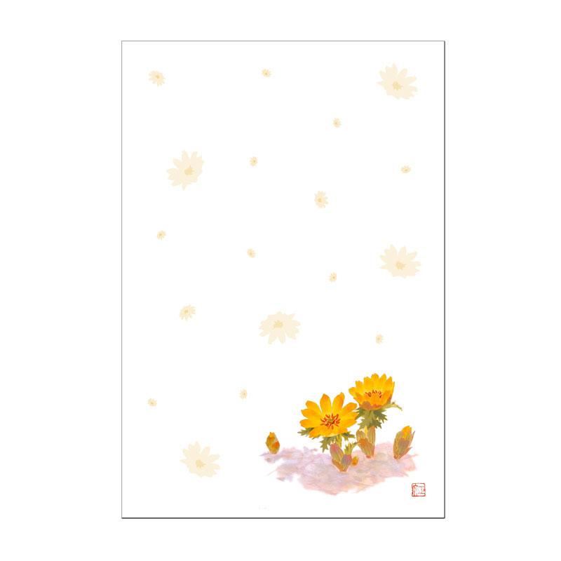 年賀絵葉書 【福寿草】 �46