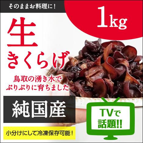 純国産 生きくらげ1kg NHKガッテンでも紹介 鳥取県産 純国産きくらげ プリプリ 食感 栄養たっぷり