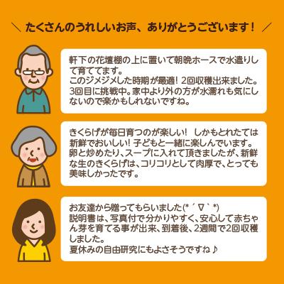 【今季販売終了しました】おうちでかんたん!純国産きくらげ栽培キット|NHK「おはよう日本」まちかど情報室にて紹介されました!