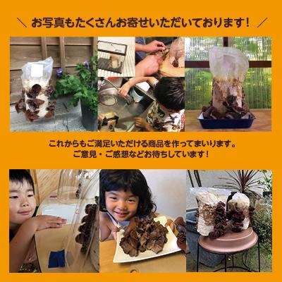 【3個セット】おうちでかんたん!純国産きくらげ栽培キット|テレビでも紹介されました!