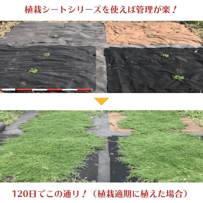 50平米分セット 通根性防草シート クラピア 植栽用 (50m2) 2m幅 25m巻 + J字型ピン (300本) 二重構造の高耐久性10年