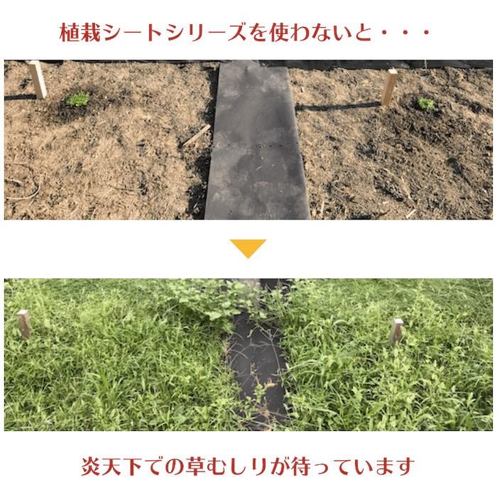 クラピア専用マルチシートセットお庭用 シート1m×12m(12m2)+ U字型ピン(50本) クラピア K7 K5 S2 ポット苗用 植栽用 吸水性 透水性 アップ