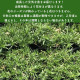 芝桜 赤色 スカーレットフレーム 9cmポット 80株 シバザクラ グランドカバー 送料無料