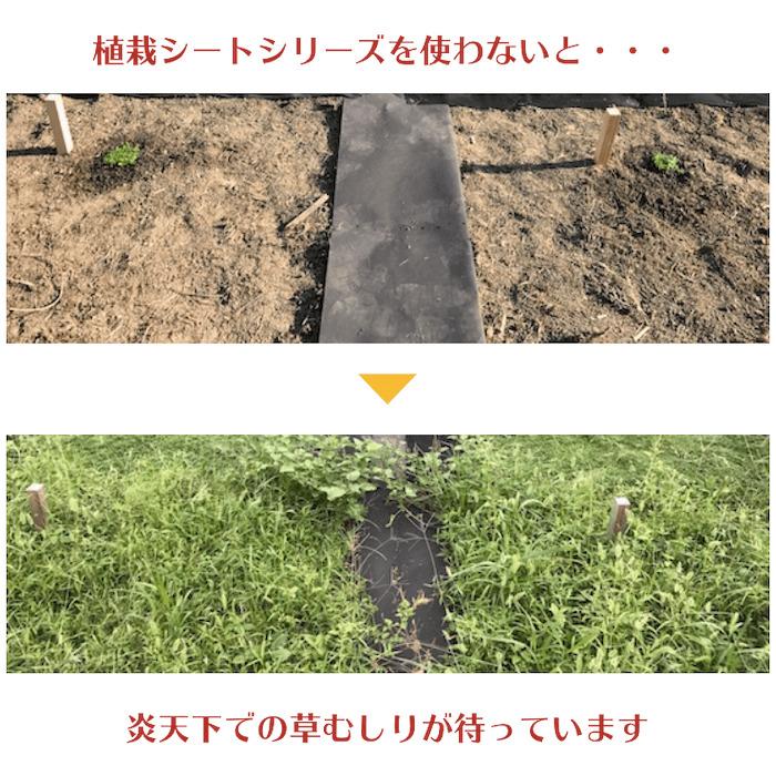 50平米分セット クラピア専用マルチシート (50m2)+J字型ピン(250本) クラピア 植栽用 吸水性 透水性 アップ