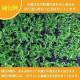 高品質 芝桜 スプラータ ピンク 9cmポット苗 160株 シバザクラ グランドカバー 送料無料 スブラータ