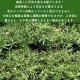 高品質 芝桜 キャンディストライプ(多摩の流れ) 白地にピンク縞種  9cmポット苗 40株 シバザクラ グランドカバー 送料無料