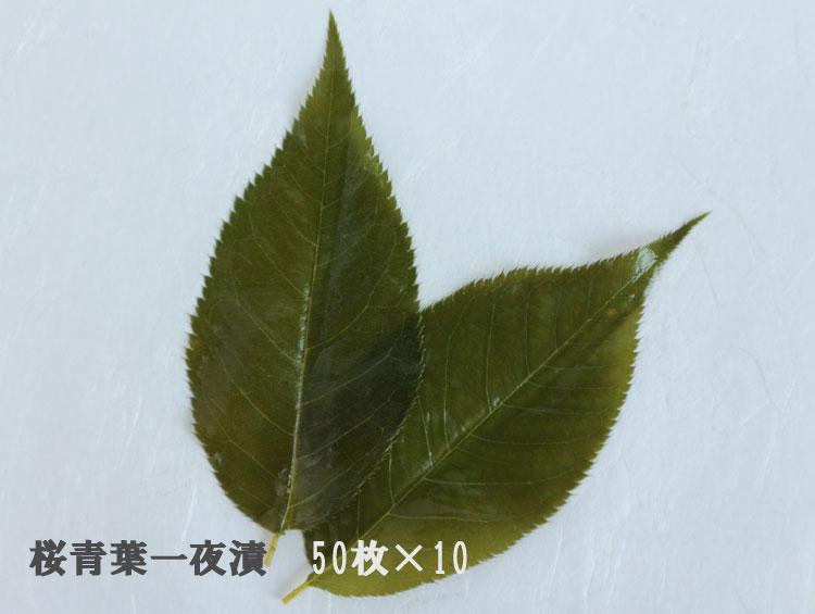 「桜葉漬(青葉)」50枚×10 無添加【純国産】■野村商店
