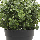 NIG705|フェイクグリーンポット 人工観葉植物 ツゲ 直径15×高さ20cm