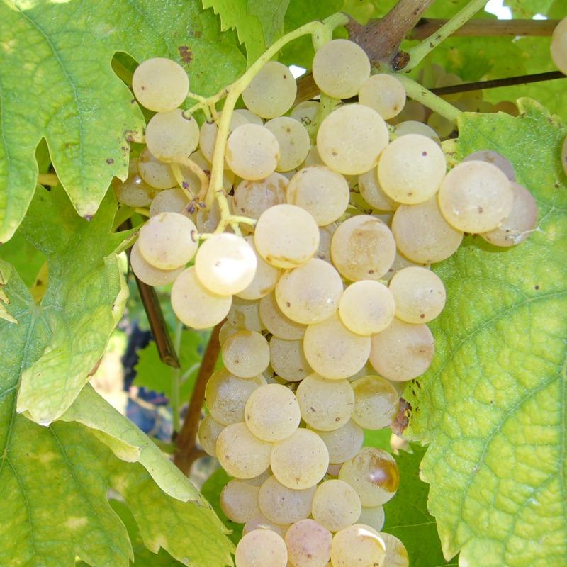 三笠会館ハウスワイン[オルトネーゼ]イタリア産 お好みの組み合わせ12本(10%OFF)