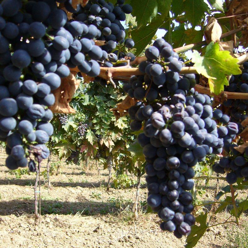 三笠会館ハウスワイン[オルトネーゼ]イタリア産 お好みの組み合わせ6本(5%OFF)