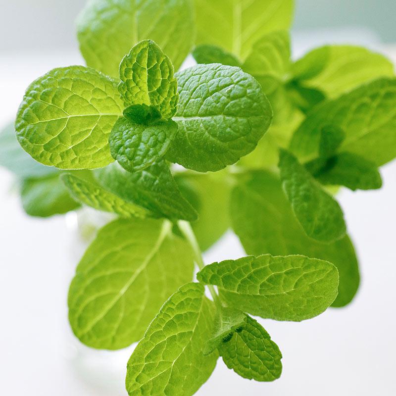【除菌・消臭】ミモレ農園 お野菜アルコール ほのかなミントの香り 本体300ml