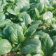 お野菜を食べるスープ 小松菜のポタージュ 5袋セット
