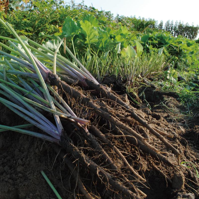 【BRUTUS掲載品】お野菜を食べるスープ 葉ごぼうの和風ホワイトスープ 5袋