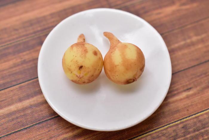 ミニチュアフード 野菜シリーズ 玉ねぎ 2個セット [SMLVEG25] [品番:35765] [m-s][imp]【ネコポス配送対応】【C】