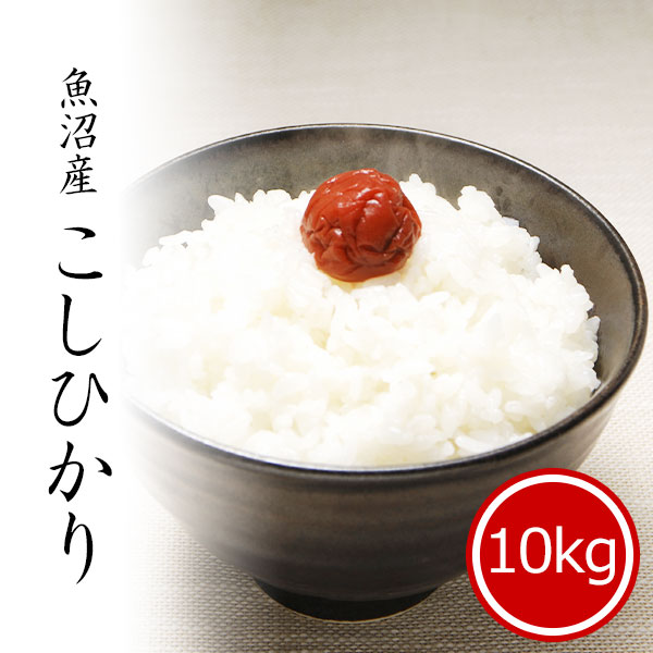 魚沼産コシヒカリ10kg 白米 令和2年産