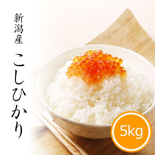 新米 新潟産コシヒカリ 5kg 白米 令和3年産